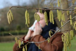 Pollen of flowering hazel trees can cause allergic rhinitis in early spring, close up of catkins in foreground, girl with handkerchief in background