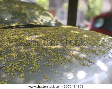 Pollen on a Car. Allergies in Spring, Springtime allergy. Allergy Season. Grey Hood.