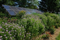 Pollinator garden, butterfly garden and solar panels on a bright summer's day.  Plants include Mexican sunflower, bee balm and Echinacea. Pollinators and solar panels form a climate change alliance.
