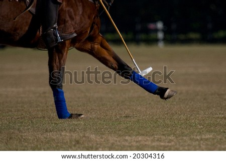 polo horse legs and mallet