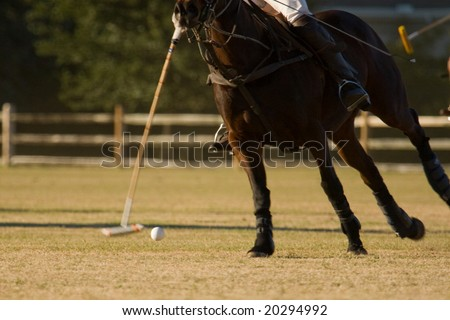 polo match  and horse