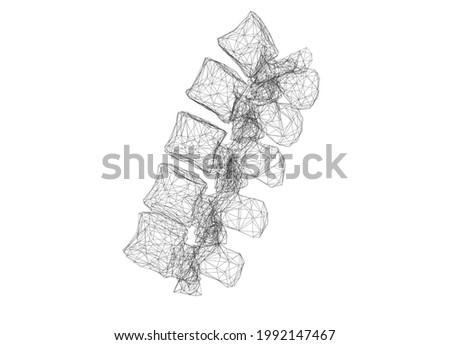 Polygon 3D model of the lumbar spine Foto stock ©