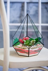 Polygon-shaped terrarium with flowers. Succulents surrounded by colored moss and sand. Decorative composition for home interior and office.