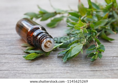 Polygonum aviculare essential oil (infusion, extract, tincture, remedy) on wooden background