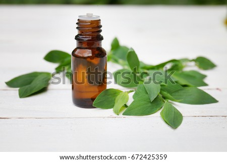 Polygonum aviculare oil (infusion, extract, tincture, remedy) on white wooden background