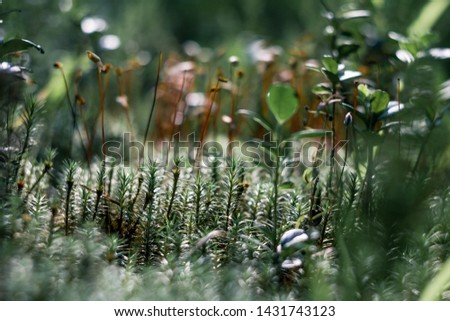 Polytrichum is a genus of mosses — commonly called haircap moss or hair moss on forest floor like #1431743123