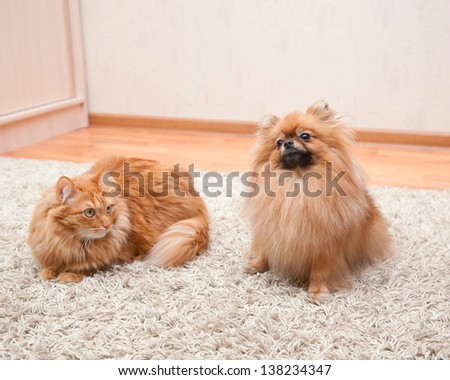 Pomeranian Dog And Cat Sitting On The Carpet