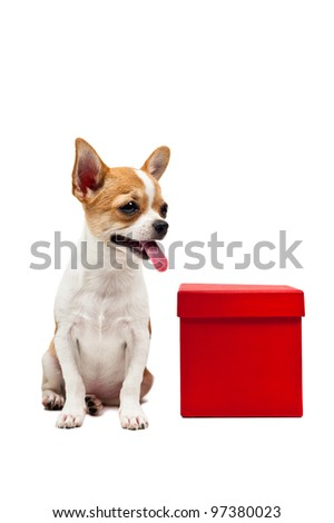 Pomeranian dog next to an red present box, over white