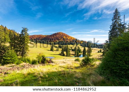 pond among spruce trees. beautiful autumn landscape in mountains. gorgeous light and mood, wonderful day spent outdoors in nature #1184862952