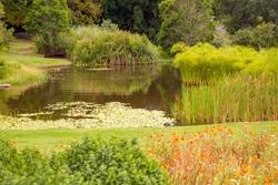 pond in Kirstenbosch Botanical garden Cape town South Africa