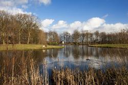 Pond in nature reserve in Leusden, The Netherlands