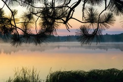 Pond in sunrise warm illumination with mist and pine branch needle silhouettes.