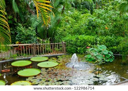 Pond in tropical garden