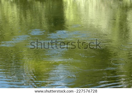 Pond. Looking for water in a pond