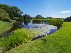 Pond, meadow, flowers. Botanical Garden, suburb of Cape Town, Western Cape, South Africa.