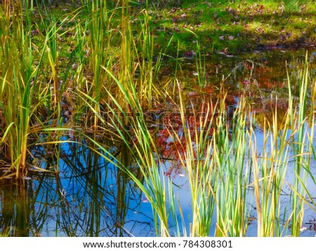 pond water reflections #784308301