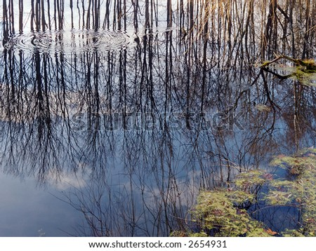 Pond water surface with reflection and ripples in the water