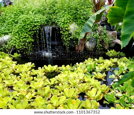 Pond Waterfall Surrounded by Lush, Cascading Greenery and Pond Plants; Tropical, Gardens, Landscaping, Water Feature Ideas