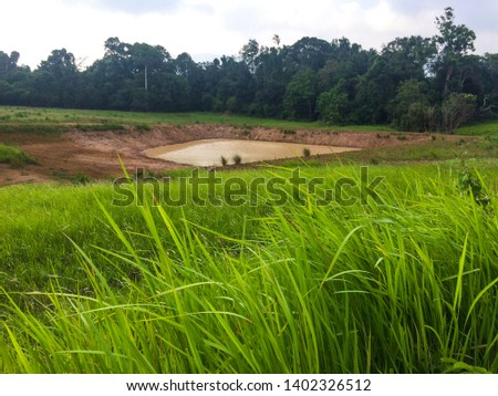 Pongdin is the soil surface. That contains many types of minerals, such as calcium, sulfur, copper, etc. These minerals are essential to the livelihood of wild animals  In Khao Yai National Park.