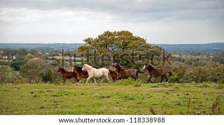 Ponies running in a field