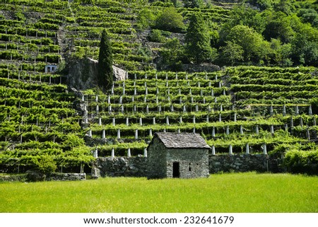 Pont San Martin - Valle d'Aosta - Vineyard in the valley - Route de vins Zdjęcia stock ©