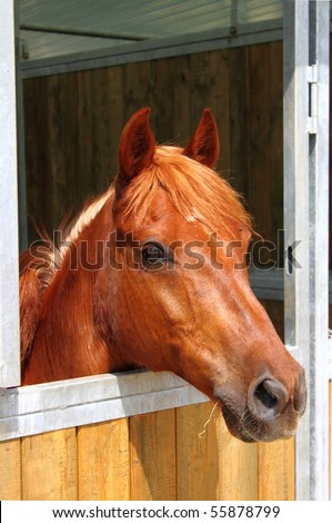 Pony in stable