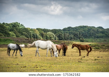 Pony's in New Forest National Park