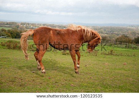 Pony springing into the air with joy - stock photo