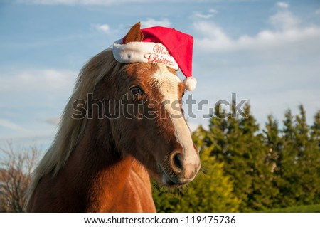 Pony wearing a Christmas hat