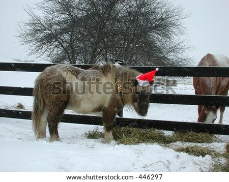 Large horse mating pony / welsh mine pony' 'cow and pony hair ...