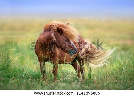 Pony with long mane and tail standing in green grass