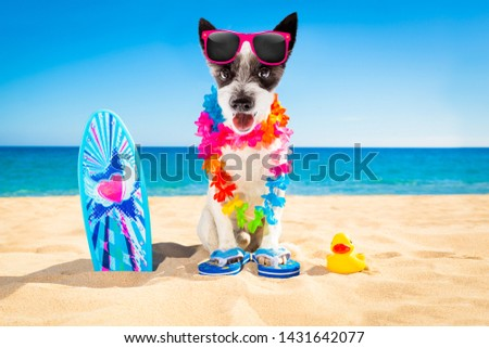 poodle dog at the beach with a surfboard wearing sunglasses and flower chain at the ocean shore on summer vacation holidays #1431642077
