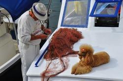 Poodle lying on board fishing boat in harbor. Fisherman unraveling fishing net.