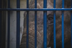 Poor Elephant behind blue bars