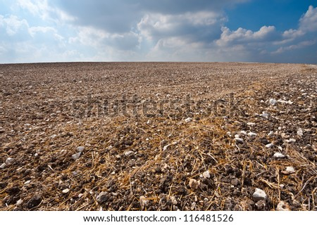 Poor Stony Soil after the Harvest in Israel