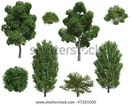 Poplar trees and bushes isolated on white background