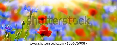 poppies and cornflowers in summertime #1055759087