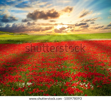 Poppies field and meadows under sunset sunbeams