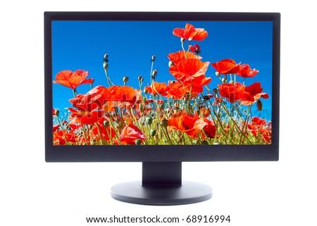poppies field on TV screen
