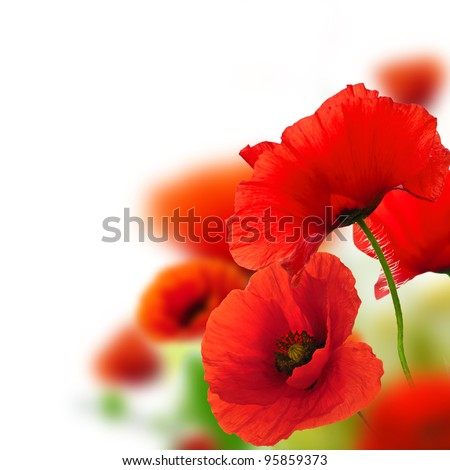 poppies white background, green and red floral design, frame