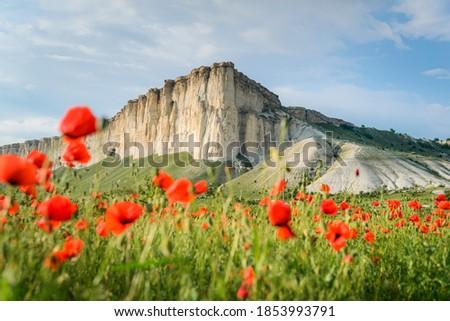 Poppy field against the background of rocky mountains, Belaya Skala, Belogorsk, Crimea Stock foto ©