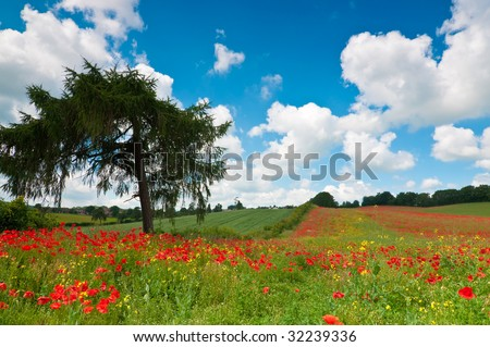 Poppy field landscape in Worcestershire, UK in summer with blue sky and fluffy clouds