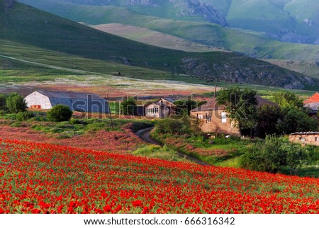 Poppy field, mountains, houses in the village.Armenia.