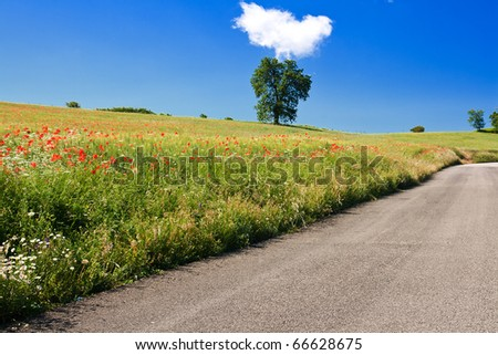 Poppy field with country road in central Italy against clear blue sky