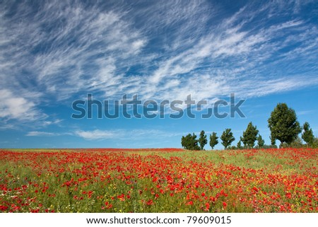 Poppy field with red poppies (Papaver rhoeas) and canola  in Mecklenburg-Vorpommern, Germany, summer landscape with dramatic sky and clouds - stock photo