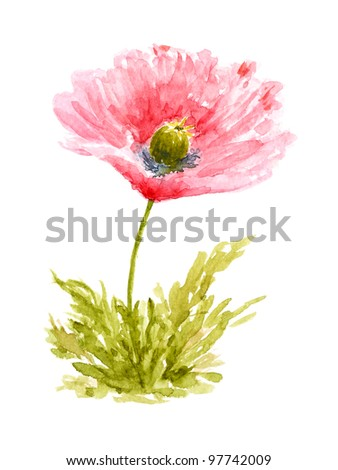 Poppy Flower Watercolor Hand Drawn and Painted, Isolated on White Background