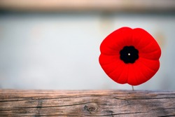 Poppy for World War I Remembrance Day