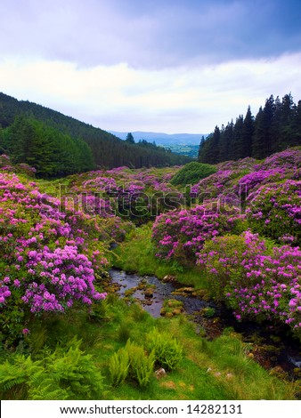 popular beauty spot in the Comeragh Mountains, Co.Waterford, Ireland