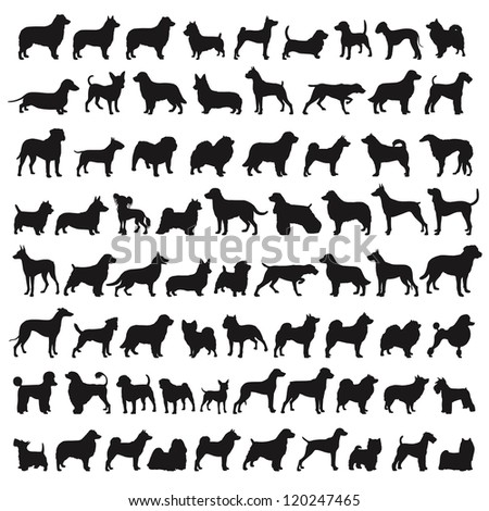 Popular Dog Species in silhouettes