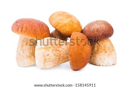 Porcini Mushrooms isolated on white